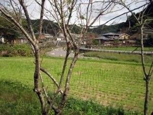 木と田と川